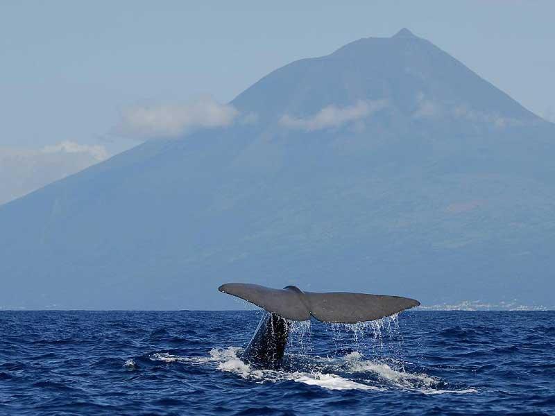 ballenas tenerife