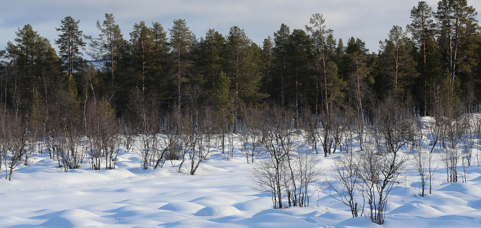 Haukkapesäjoki, Inari, Finland