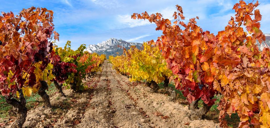 ORSH_La_Rioja (17)_950x450