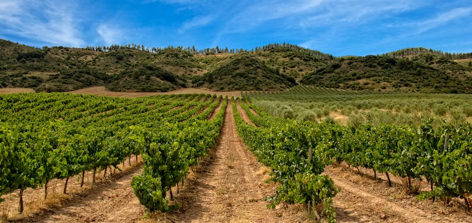 ORSH_La_Rioja (5)_950x450