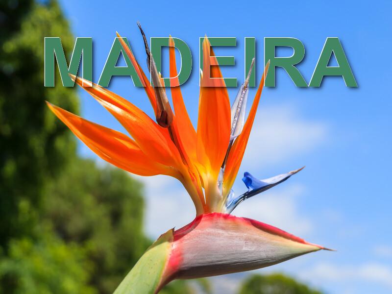800x600 Madeira