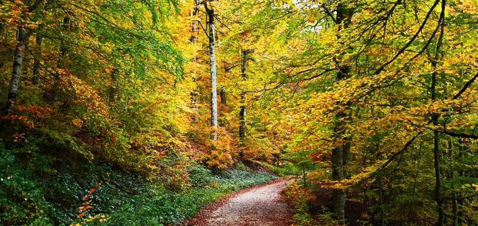 bosque 950 x 450