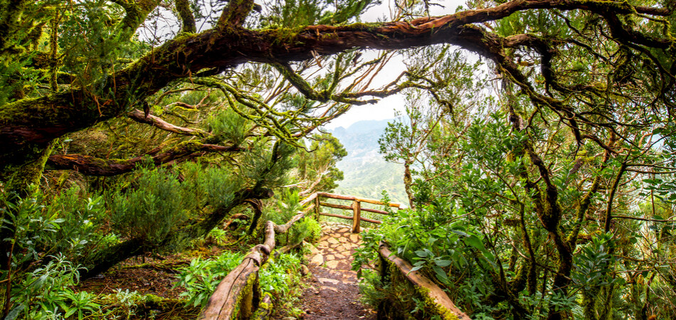 950x450 Garajonay national park with viewpoint terrace on La Gomera island in Spain